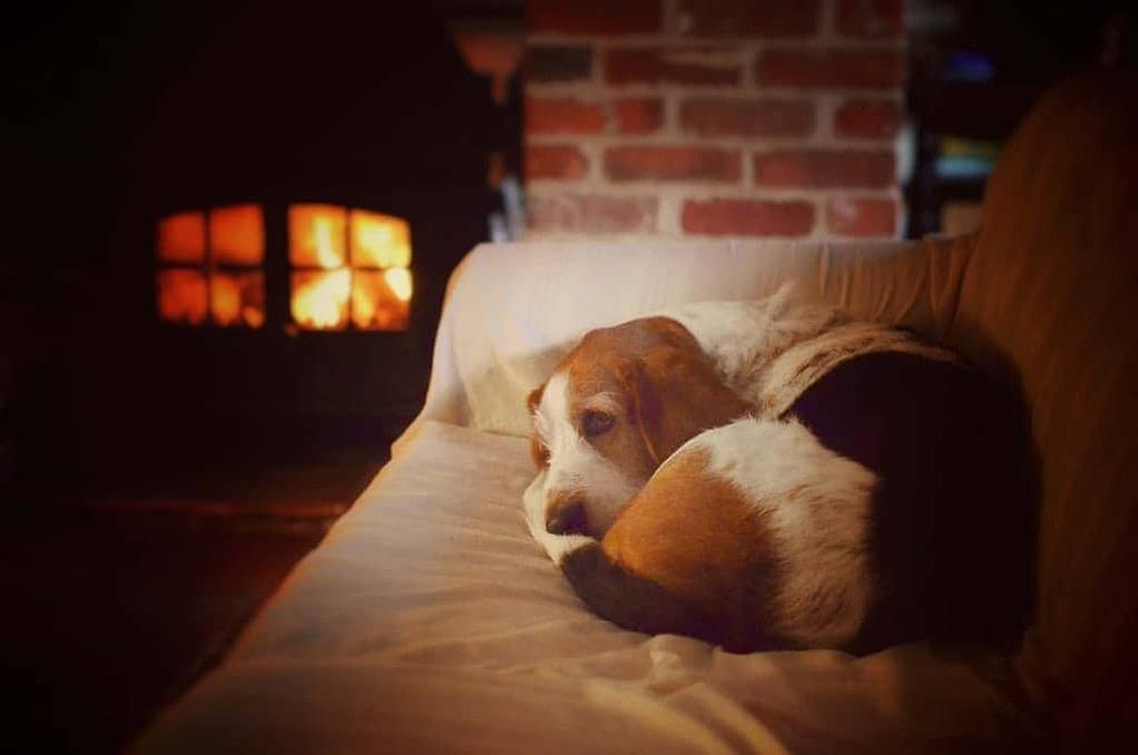 East Ruston Dog Friendly Holiday Cottage Norfolk