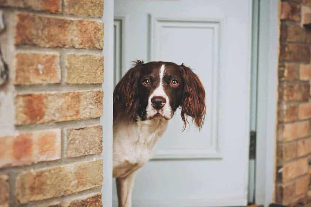 North Norfolk Holiday Cottages Dog Friendly
