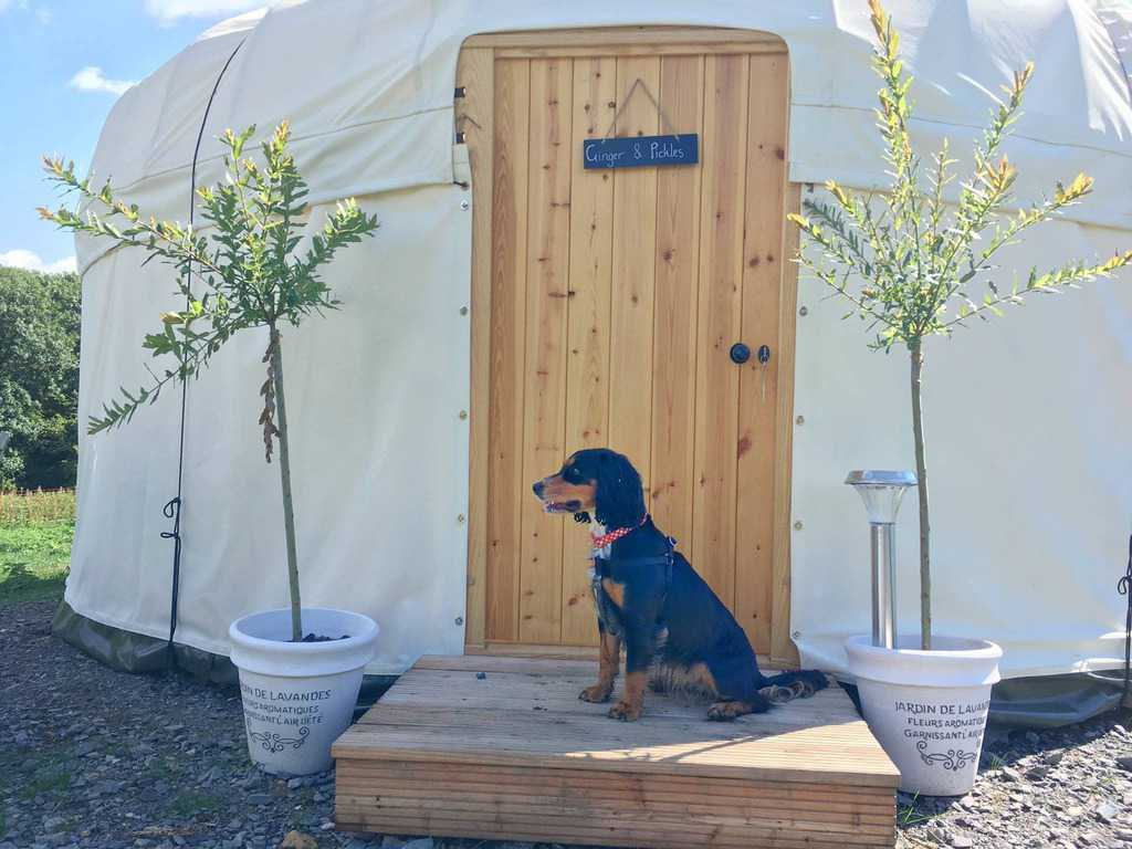 Country Bumpkin Yurts Leicestershire