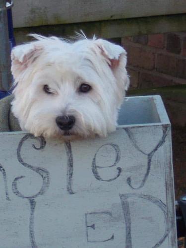 Helmsley Walled Garden Dog Friendly Yorkshire (PC Richard Aspinall)