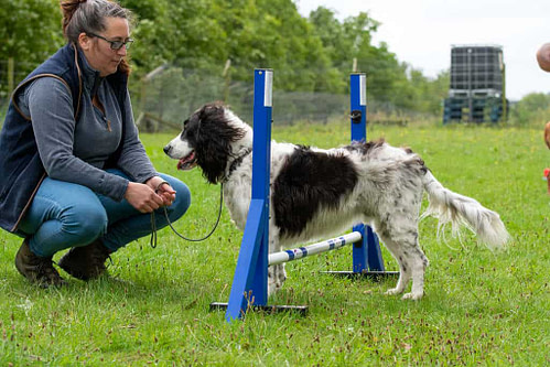Core Strength Training for Dogs