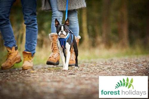 Forest Holidays Dog Friendly Deerpark Cornwall