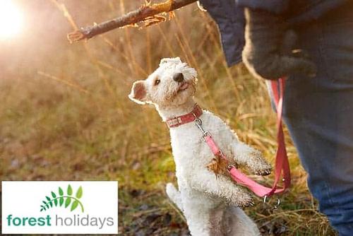 Forest Holidays Dog Friendly Beddgerlert Snowdonia