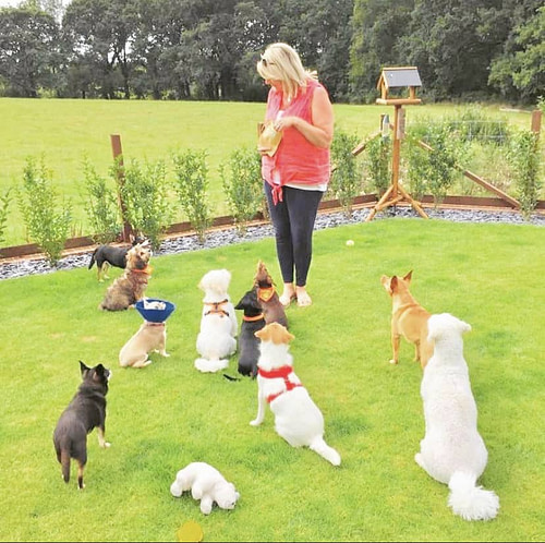 Diddy Dogs Lodge Small Breed Dog Boarding