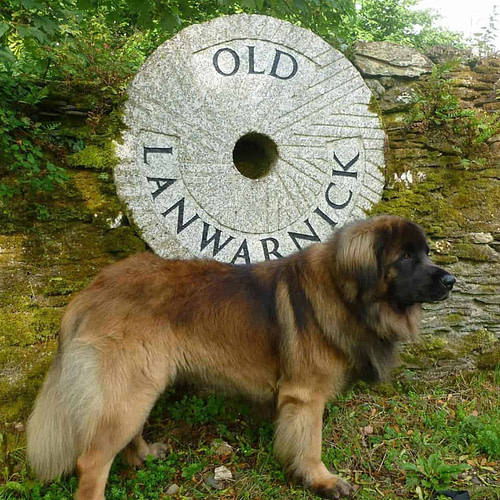 Old Lanwarnick Self Catering Cottages Dog Friendly Cornwall
