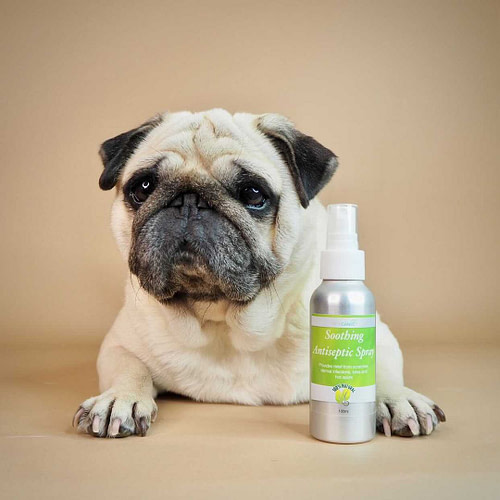 Vita Canis Soothing Antiseptic Spray for Dogs