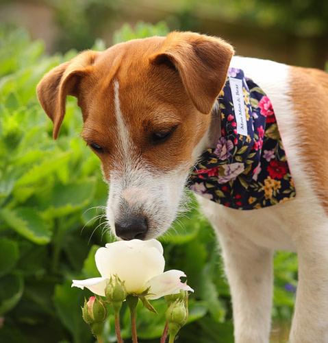 Poppy Dog Sniffing Flower
