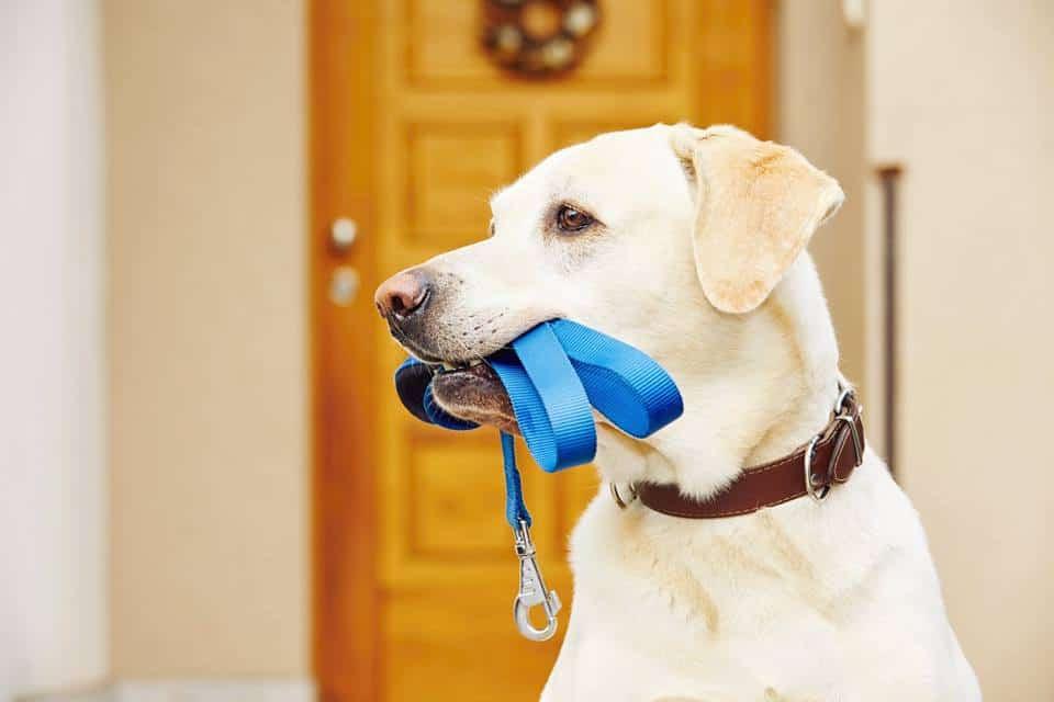 Sykes Holiday Cottages Dog Friendly UK