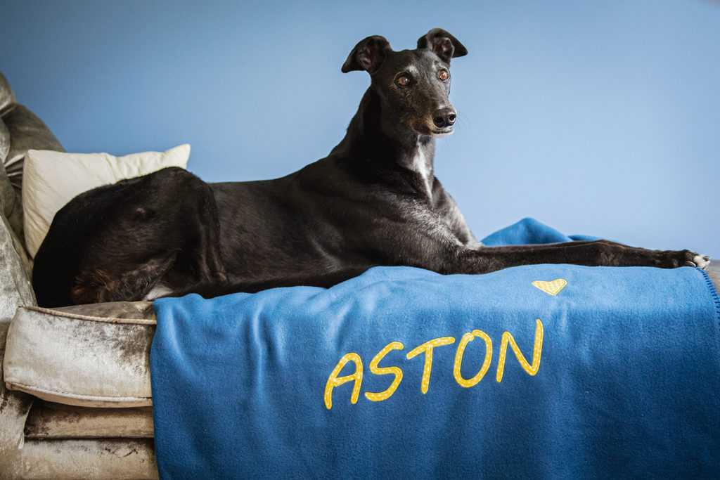 Personalised Dog Blankets Slumbering Hound