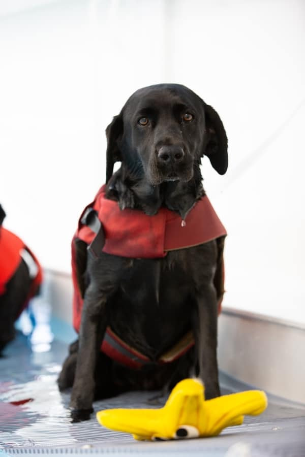 Lucy Pet Carer Hydrotherapy Pool Wootton Bassett