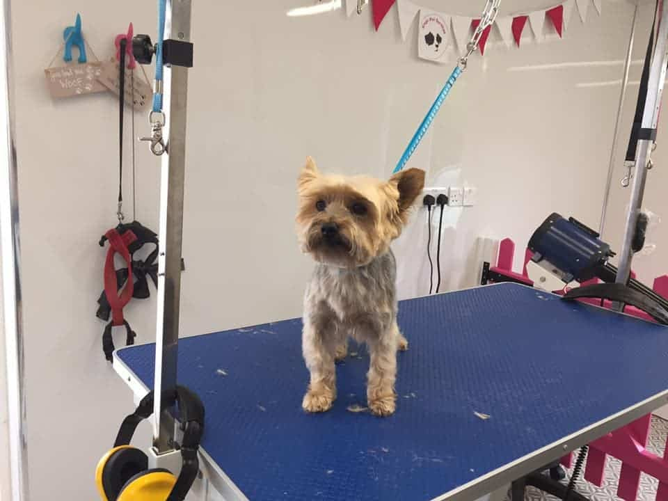 Dog Groomers Kings Pet Services Kent