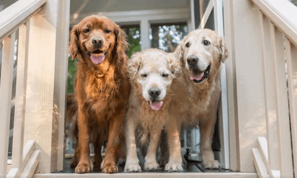 Dogs Enjoying a Dog Friendly Getaway
