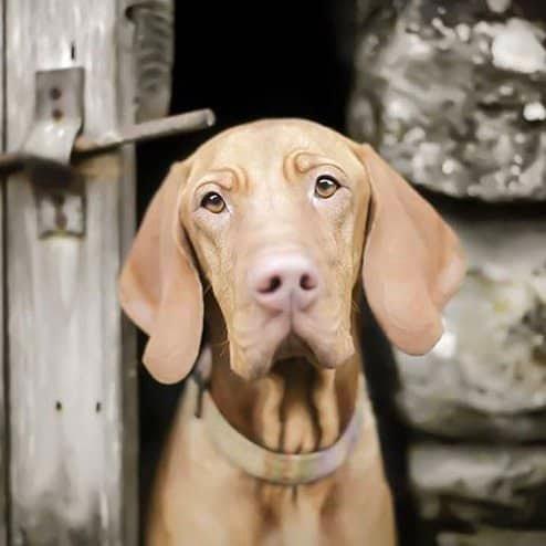 Jos Dog Boutique