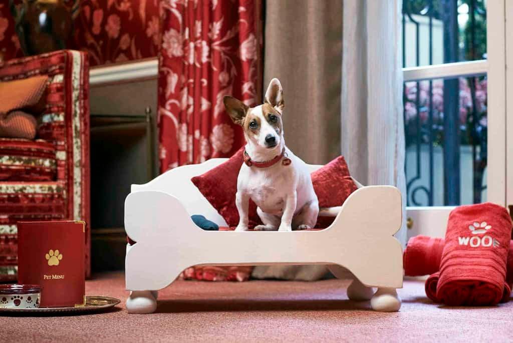 Egerton House Hotel Dog Friendly London.jpg