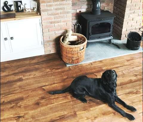 Floors for Paws.jpg