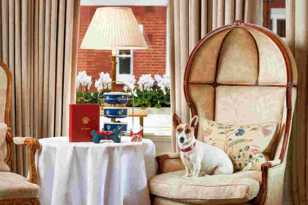 Egerton House Hotel Knightsbridge Dog Friendly.jpg