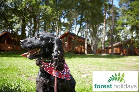 Forest Holidays Dog Friendly Blackwood Forest