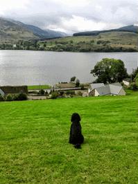 Dog Friendly Little Briar Cottage -admired by Oscar cockapoo