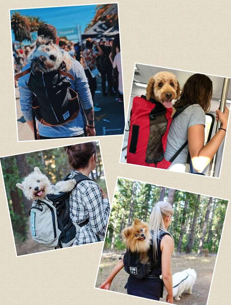 Pet Friendly Express Dog Rucksack